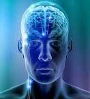 aree corticali cerebrali